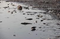 BALIK TÜRÜ - Sular Çekilince Binlerce Balık Telef Oldu