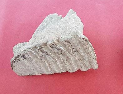Adana'da fil kalıntıları bulundu