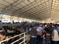CUMA ÖZDEMIR - Hayvan Pazarı Yeni Yerinde Faaliyete Başladı