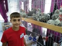 MURAT ÇELIK - Lapseki'de 5. Geleneksel Kanatlı Hayvan Mezadı Yapıldı