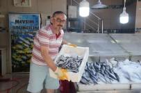 Marmara Hamsisi Sinop Tezgahlarında
