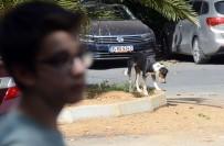 SARIYER BELEDİYESİ - Sarıyer'de Saldırgan Sokak Köpekleri Yüzünden Mahalleli Dışarı Çıkamıyor