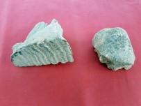 DOĞU AKDENİZ - Tatarlı Höyük Kazılarında Fil Kalıntıları Bulundu