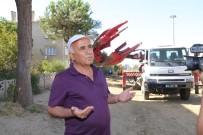 BEBEK ARABASI - Ağaç Nakillerine Vatandaşlardan Teşekkür