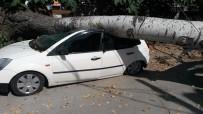 ŞIRINEVLER - Ağaç Otomobilin Üzerine Devrildi