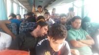 DOĞUBEYAZıT - Bir Otobüste Tam 96 Göçmen !