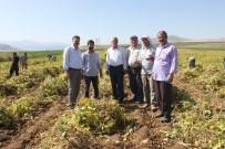 KURU FASULYE - Bitlis, Fasulye Üretiminde Artık Söz Sahibi