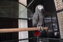 ÇALINTI OTOMOBİL - Hırsızlık Çetesi Bu Papağan Sayesinde Çökertildi