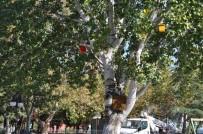 ŞİDDETLİ YAĞIŞ - Karabiga Belediyesi Ağaçlara Kuş Evleri Koydu