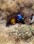 SÜTLÜCE - Tunceli'de Yaralı Köpeği AFAD Ekibi Kurtardı