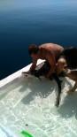 EDREMİT KÖRFEZİ - Turizme Hizmet Eden Köpek Balıkları Salıverildi