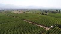 ORGANIK TARıM - Türkiye'nin Organik Ürünleri Manisa'dan