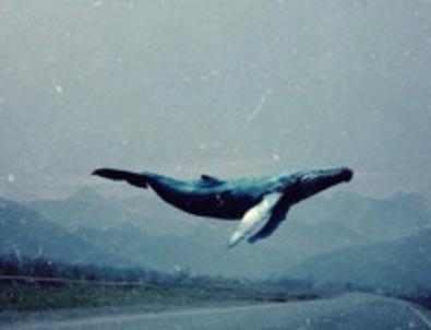 Uzmanlardan 'Mavi Balina' Uyarısı