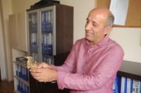 BALABAN - Cizre'de Balaban Kuşu Bulundu