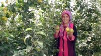ŞEKER ORANI - Konya'da Çiftçinin Yeni Umudu 'Japon Armudu'