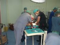 AMELİYATHANE - Kulp Belediyesi 115 Çocuğu Sünnet Ettirdi