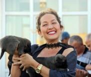 HÜSEYIN YıLDıZ - Yabancı Turistler Kangal Köpeğine Hayran Kaldı