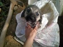 KONAKLı - Yavru Köpeği Çuvala Koyup Üzerini Meyve Kasasıyla Kapatıp Ölüme Terk Ettiler