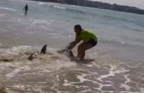KÖPEK BALIĞI - Köpek Balığını Kuyruğundan Çekerek Suya Bıraktı