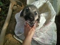 KONAKLı - Ölüme Terk Edilen Yavru Köpeği Alman Aile Kurtarmış