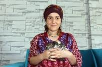 BEBEK BAKIMI - Yavru Kedilere Bebeği Gibi Bakıyor