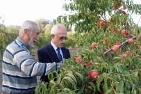 Yozgat'ta Meyve Bahçeleri 25 Bin Dekara Ulaştı