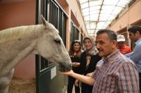 BELÇIKA - Vali Kaymak, Büyükşehir Belediyesi Atlı Spor Tesislerini Gezdi