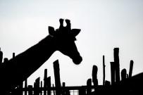 İZMIR DOĞAL YAŞAM PARKı - Fotoğraf Düşkünleri İçin Doğal Yaşam Yarışması