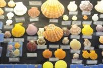 BODRUM BELEDİYESİ - Hasan Güleşçi Koleksiyonunu Bodrum Deniz Müzesi'ne Bağışladı