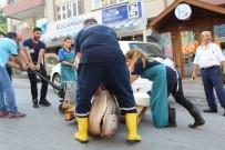KÖPEK BALIĞI - Marmara'dan 2 Köpek Balığı Çıktı