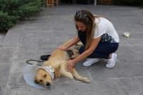 KÖPEK - Sokakta Bulduğu Köpeğin Ameliyatı İçin Sponsor Arıyor
