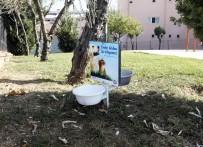 KUBBE - Sultanbeyli'de Sokak Hayvanları Unutulmadı
