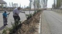 TAFLAN - Sungurlu'da 9 Bin Fidan Toprakla Buluştu