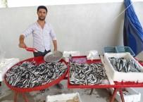 ALABALIK - Balık Tezgahları Şenlendi