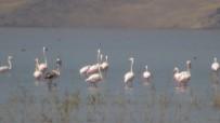 ZİYARETÇİLER - Flamingoların Görsel Şöleni
