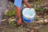 AHMET CAN - Çiftçinin Hırsızla Hikayesi Akıllara Durgunluk Getirdi