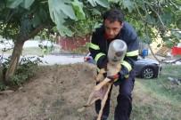 ALIKAHYA - Kafasını Turşu Bidonuna Sıkıştıran Köpeğe İtfaiye Yardımı