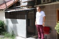 KÖPEK - Sakarya'da 70 Kiloluk Saint Bernard Türü Köpek Çalındı