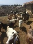 HAYVAN - Aslanapalı Üreticiye Genç Çiftçi Projesinde Kapsamında 37 Küçükbaş Hayvan Teslim Edildi