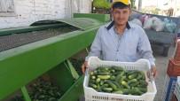 KURUCUOVA - İkinci Ürün Salatalık Yüz Güldürüyor