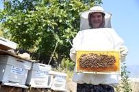 GÜBRE - 'Kırsal Alanlarda Yaşayan Kadın Üreticileri Mersin Arıcılığına Kazandırma' Projesi