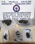 Milas'taki Uyuşturucu Operasyonunda 1 Tutuklama