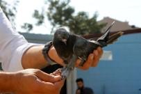 REKOR - Şampiyon Kuş Havada 4 Saat Kalarak Rekor Kırdı