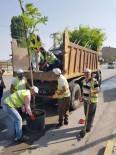 KAZIM KARABEKİR - Yeni Yollar Ağaçlarla Donatıldı