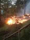 YILDIRIM DÜŞTÜ - Yıldırım Düşmesi Sonucu Ormanlık Alanlarda Yangınlar Çıktı