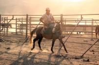 Yılkı Atları Yakalanmaya Başladı