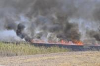 SİGARA İZMARİTİ - Mogan Gölü'nde Sazlık Alanlar Yandı