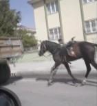 Vicdansız Sürücü Römorkun Arkasına Bağladığı Atı Kilometrelerce Koşturdu