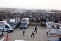 BÜYÜKBAŞ HAYVANLAR - Yükselen Saman Fiyatları Hayvan Pazarını Olumsuz Etkiliyor