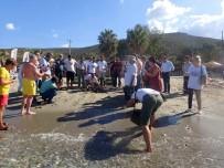 KAYALı - 1,5 Yıl Tedavi Gören Caretta Caretta Denize Bırakıldı